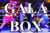 Gala de box la Movila Miresii