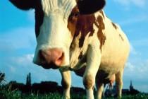 APIA | Primește Cereri inițiale anuale de solicitare a ajutorului de stat în sectorul creşterii animalelor pentru anul 2021