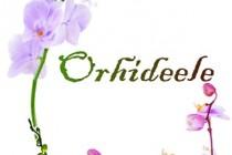 Orhideele, foto-expozitie la sediul Muzeului Brailei din Parcul Monument