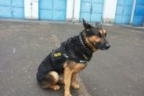 Rex, Sara, Bob - câini politisti, spaima criminalilor si traficantilor de tigari