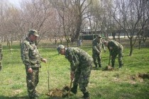 Activitati de plantare de pomi organizate de Brigada 10 Geniu de Ora Pamântului