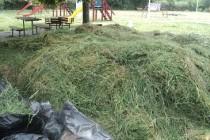 Jandarmii Braileni au ecologizat parcul de pe strada Industriei