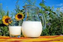 Ce influenţează calitatea laptelui de vacă