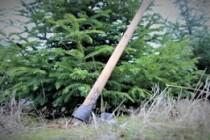Tăierile ilegale în scădere puternică în pădurile de stat administrate de Romsilva