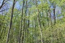 Aproximativ 7,6 milioane lei alocați de Guvern pentru constituirea unor perdele forestiere de protecție a Autostrăzii A2, județul Constanța