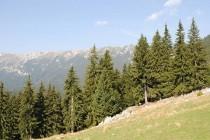Mediu | Igienizare în Munții Baiului – Munte Verde și Curat