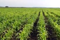MADR: Activitatea fermierilor va continua în cele mai bune condiții