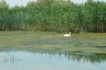 1 Septembrie – Ziua Rezervaţiei Biosferei Delta Dunării
