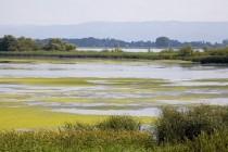 Inspectorii sanitari verifică respectarea normelor de sănătate publică pe litoral și în Delta Dunării