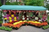 Festivalul florilor de primavara in Gradina Publica din Braila