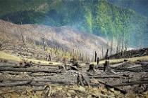 Scade numărul incendiilor din pădurile de stat administrate de Romsilva