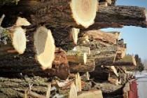 Romsilva: Lemn pentru foc mai mult pentru populație