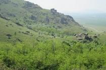 VOLUMUL TĂIERILOR ILEGALE ÎN FONDUL FORESTIER DE STAT ÎNREGISTREAZĂ O NOUĂ SCĂDERE