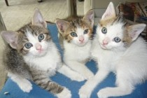 De-a şoarecele şi pisica