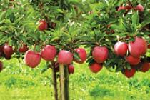 Sprijin financiar pentru producătorii agricoli din sectorul fructe