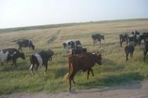 APIA efectuează plăți pentru beneficiarii Măsurii 14 - Bunăstarea animalelor