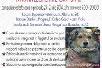 Braila: Campanie de microcipare si sterilizare a câinilor