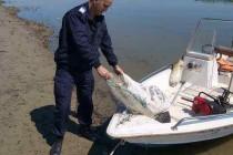 Jandarmeria Braila | Braconieri pescuiau ilegal