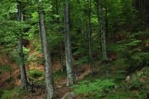 Romsilva | S-a lansat prima ediție a Catalogului de prezentare a sortimentelor de lemn fasonat