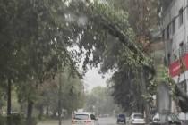 Furtuna din Brăila a doborât peste 30 de copaci