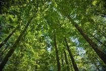 Romsilva | 2.227 hectare de păduri incluse în Catalogul Național al Pădurilor Virgine și Cvasivirgine