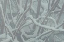 Cod galben de ninsori în 10 județe