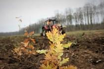 2.000.000.000 de puieți forestieri plantați de Regia Națională a Pădurilor de la înființare