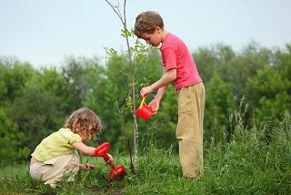 copii plantand